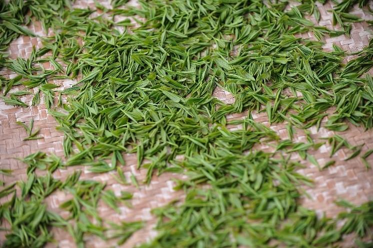 Thé vert sur une nappe